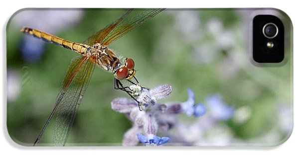 Dragonfly In The Lavender Garden IPhone 5 Case