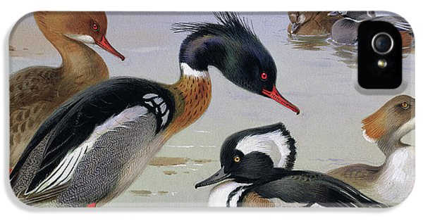 Ducks By A Lake IPhone 5 / 5s Case by Archibald Thorburn