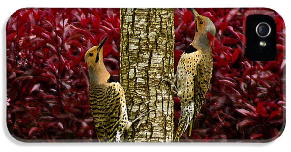 Dueling Woodpeckers IPhone 5 Case
