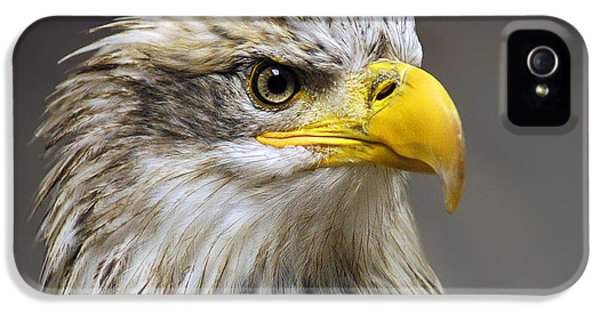 Eagle IPhone 5 Case by Harry Spitz