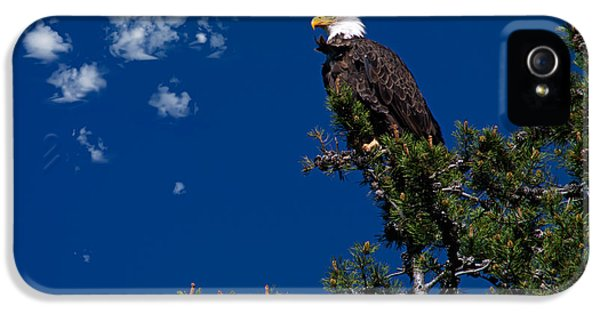 Eagle IPhone 5 Case by Leland D Howard