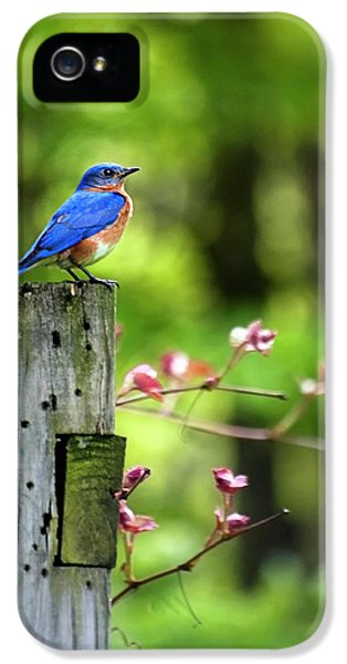 Eastern Bluebird IPhone 5 Case by Christina Rollo