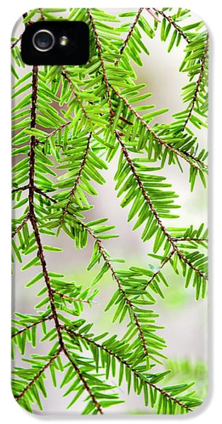 Eastern Hemlock Tree Abstract IPhone 5 Case by Christina Rollo
