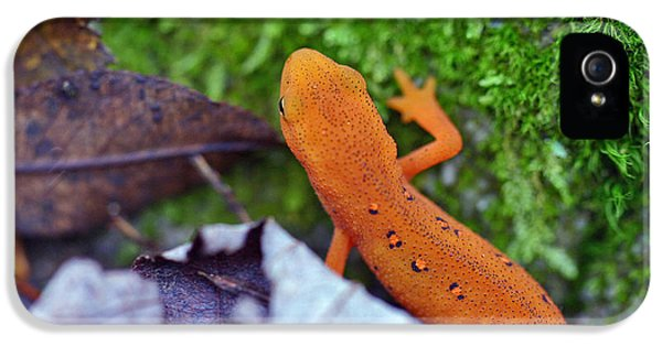 Eastern Newt IPhone 5 / 5s Case by David Rucker
