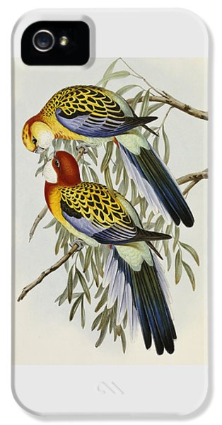 Eastern Rosella IPhone 5 Case by John Gould
