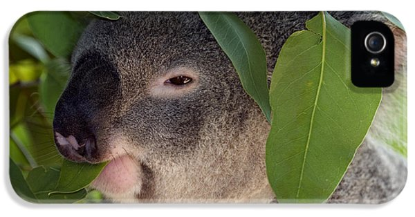 Koala iPhone 5 Case - Eat Your Greens by Mike  Dawson