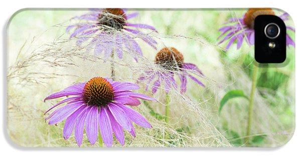 Echinacea In The Grass IPhone 5 Case