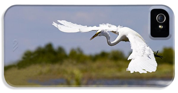 Avian iPhone 5 Cases - Egret Ballet iPhone 5 Case by Mike  Dawson