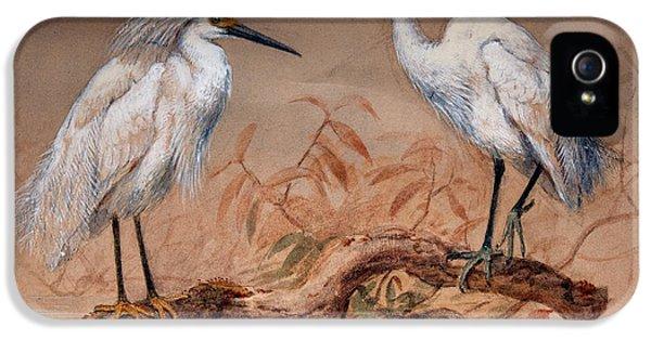 Egrets IPhone 5 Case