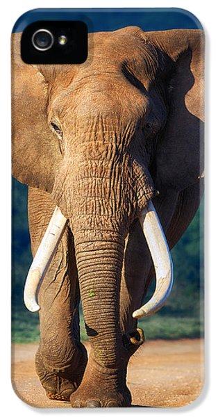 Elephant Approaching IPhone 5 Case by Johan Swanepoel