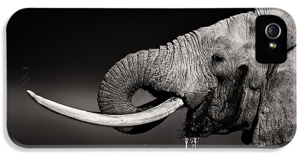 Elephant Bull Drinking Water - Duetone IPhone 5 Case by Johan Swanepoel