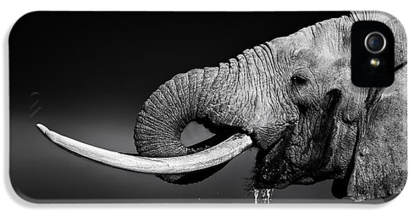 Elephant Bull Drinking Water IPhone 5 Case by Johan Swanepoel
