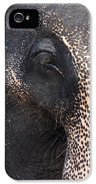 Aged iPhone 5 Cases - Elephant iPhone 5 Case by Jane Rix