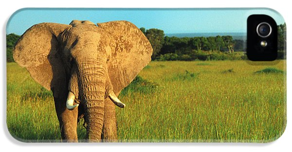 Elephant iPhone 5 Cases - Elephant iPhone 5 Case by Sebastian Musial