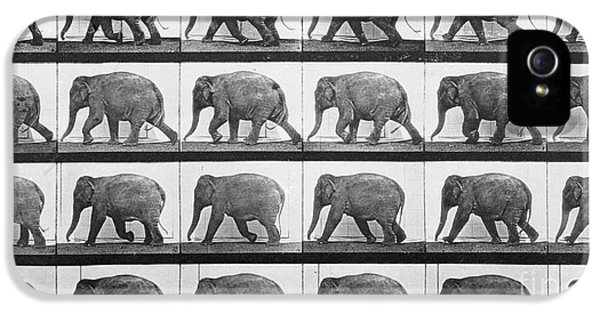 Elephant Walking IPhone 5 Case by Eadweard Muybridge