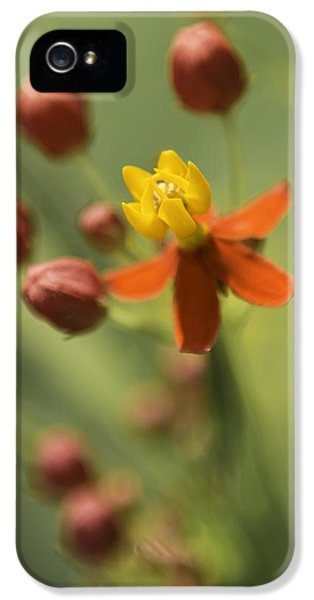 Emergence - Asclepias Curassavica - Butterfly Milkweed - South Carolina Botanical Gardens IPhone 5 Case by Johan Hakansson