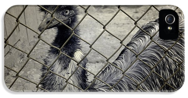 Emu At The Zoo IPhone 5 Case by Luke Moore