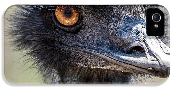 Emu Eyes IPhone 5 Case by Paul Freidlund