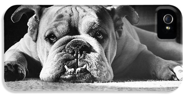 Canid iPhone 5 Cases - English Bulldog iPhone 5 Case by M E Browning and Photo Researchers