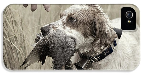 English Setter And Hungarian Partridge - D003092a IPhone 5 Case by Daniel Dempster