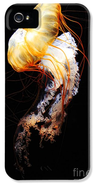 Enigma IPhone 5 Case