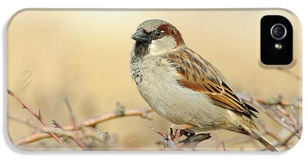 Eurasian Tree Sparrow IPhone 5 Case by Dr. Rainer Herzog