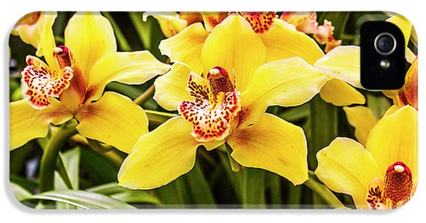 Orchid iPhone 5 Case - Exotic Orchids  by Jorgo Photography - Wall Art Gallery
