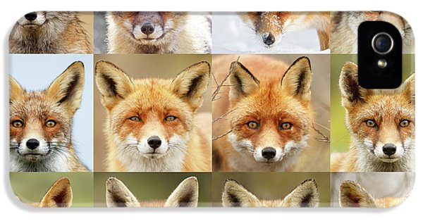 Faces Of Foxes IPhone 5 Case