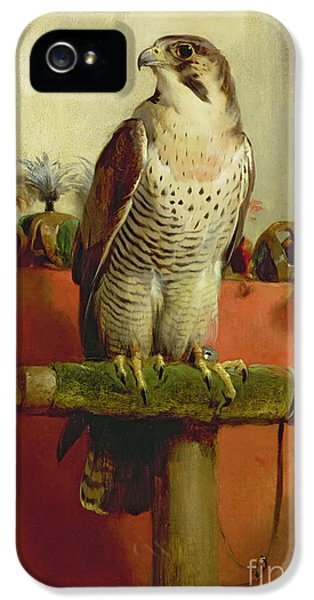 Falcon IPhone 5 Case by Sir Edwin Landseer