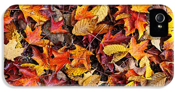 Fall Leaves On Forest Floor IPhone 5 Case by Elena Elisseeva