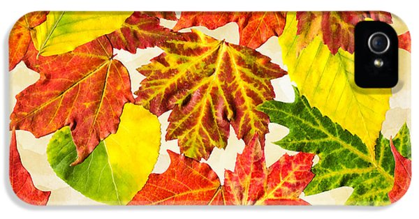 IPhone 5 Case featuring the mixed media Fall Leaves Pattern by Christina Rollo