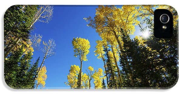 Fall Light IPhone 5 Case by Chad Dutson