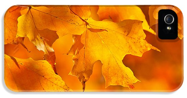 Fall Maple Leaves IPhone 5 Case by Elena Elisseeva