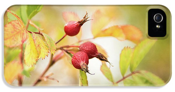 Fall Rose Hips 2 IPhone 5 Case
