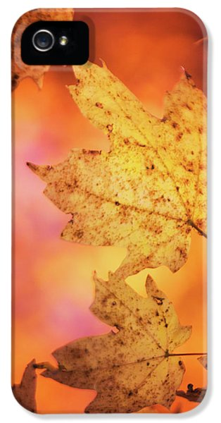 Fall Reveries IPhone 5 Case