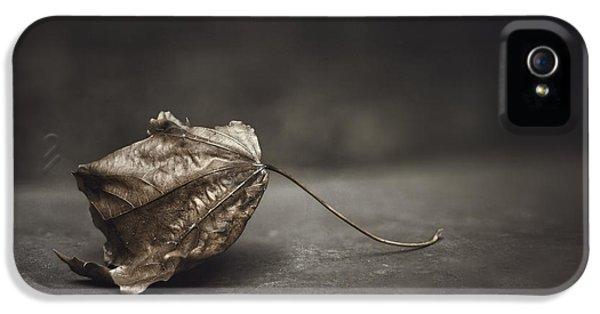 Fallen Leaf IPhone 5 Case by Scott Norris
