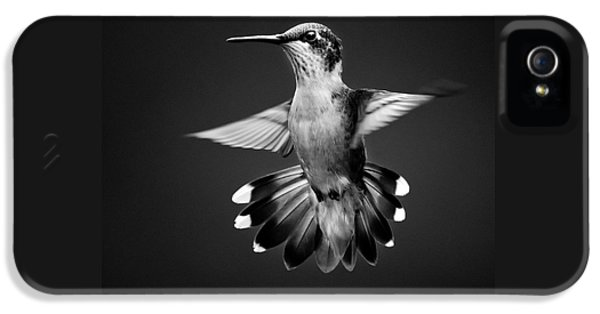 Fantail Hummingbird Square Bw IPhone 5 Case by Christina Rollo