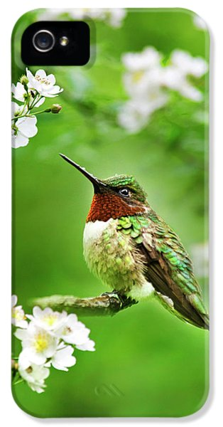 Fauna And Flora - Hummingbird With Flowers IPhone 5 Case
