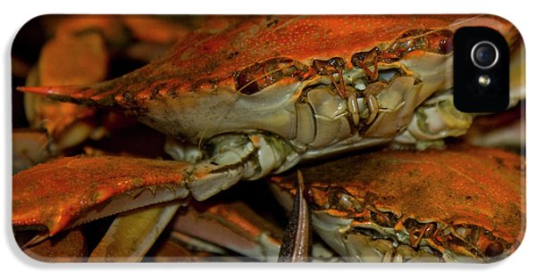 Feeling Crabby IPhone 5 Case by Betsy Knapp