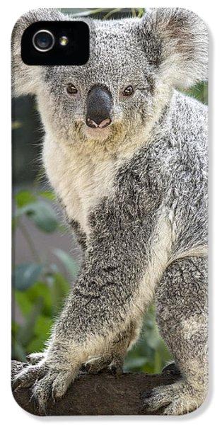Female Koala IPhone 5 Case by Jamie Pham