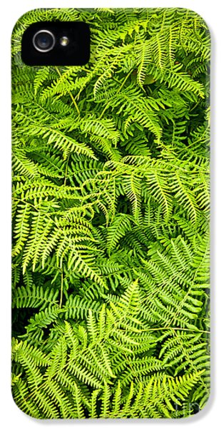 Fern IPhone 5 Case by Elena Elisseeva