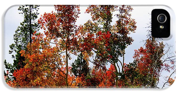 IPhone 5 Case featuring the photograph Festive Fall by Karen Shackles