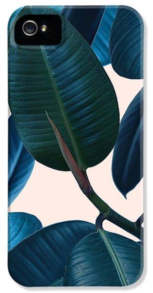 Ficus Elastica 2 IPhone 5 Case by Mark Ashkenazi