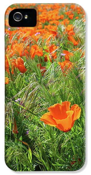 Field Of Orange Poppies- Art By Linda Woods IPhone 5 Case by Linda Woods