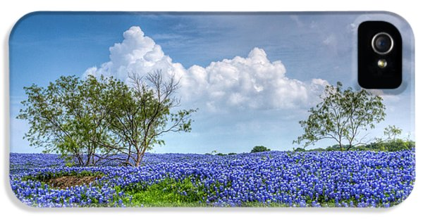 Bluebonnets iPhone 5 Case - Field Of Texas Bluebonnets by David and Carol Kelly