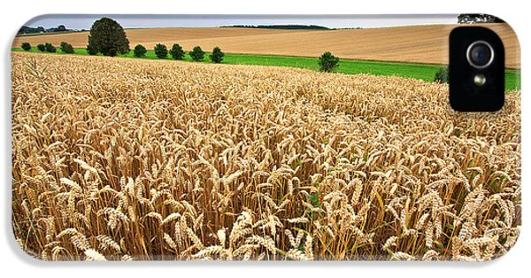 Field Of Wheat IPhone 5 Case