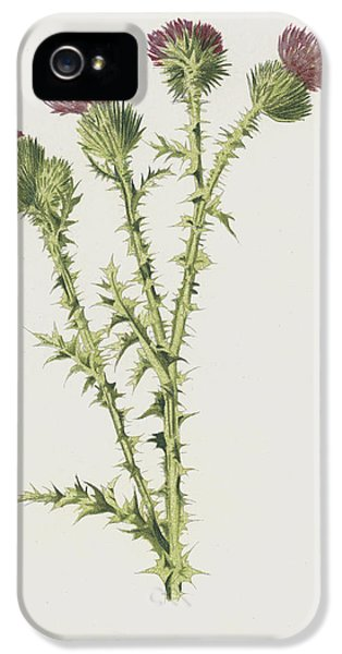 Field Thistle IPhone 5 Case