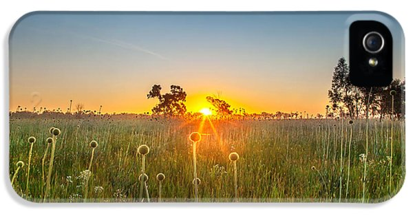 Fields Of Gold IPhone 5 Case by Az Jackson