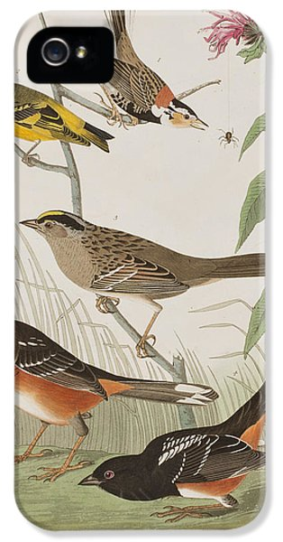 Finches IPhone 5 Case by John James Audubon