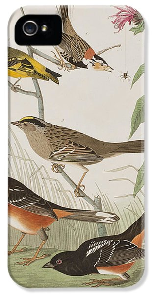 Finches IPhone 5 / 5s Case by John James Audubon